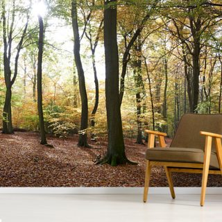 Autumn Forest Panoramic Wallpaper Wall Murals