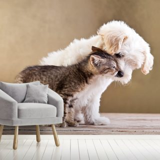 Dog and Cat Wallpaper Wall Murals