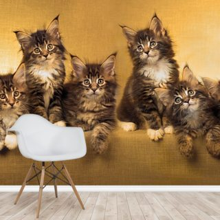 Kittens Panoramic Wallpaper Wall Murals