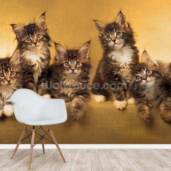 Kittens Panoramic wallpaper mural room setting