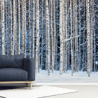 Snowy Birch Forest Wallpaper Wall Murals