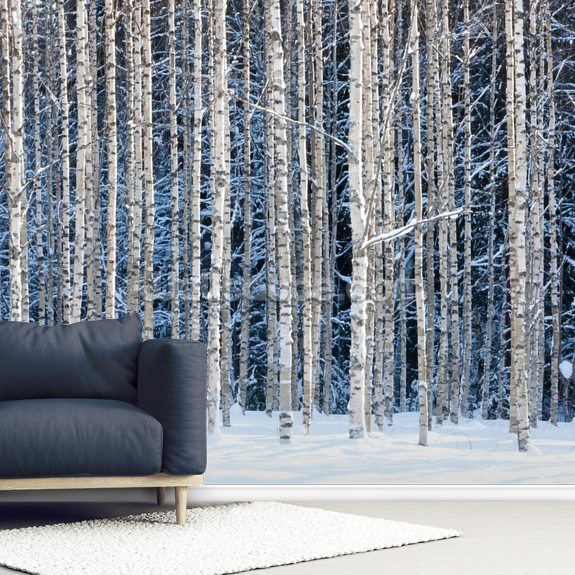 Snowy Birch Forest wallpaper mural room setting