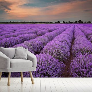 Fields of Lavenders
