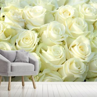 White Roses Wallpaper Wall Murals