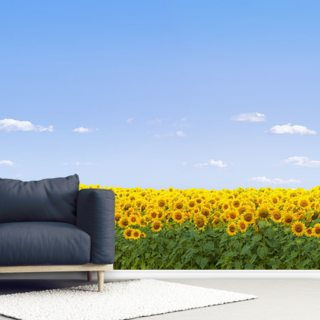 Sunflowers Wallpaper Wall Murals