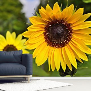 Sunflower Wallpaper Wall Murals