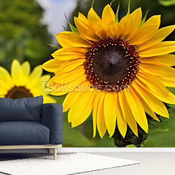 Sunflower wallpaper mural room setting