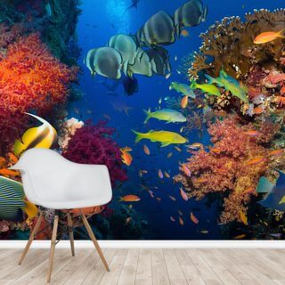 Coral and Fish Wallpaper Wall Murals