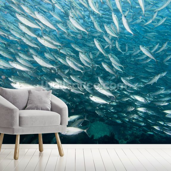 A School of Fish wall mural room setting