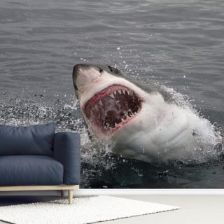 Great White Shark Wallpaper Wall Murals