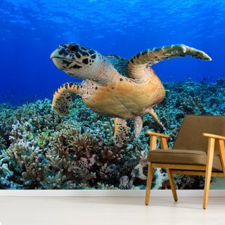 Sea Turtle in Tropical Waters