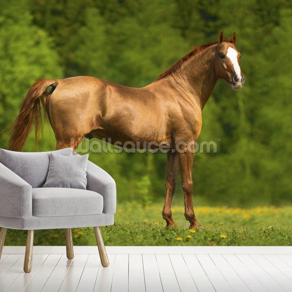 Horse In Summer Wallpaper Mural