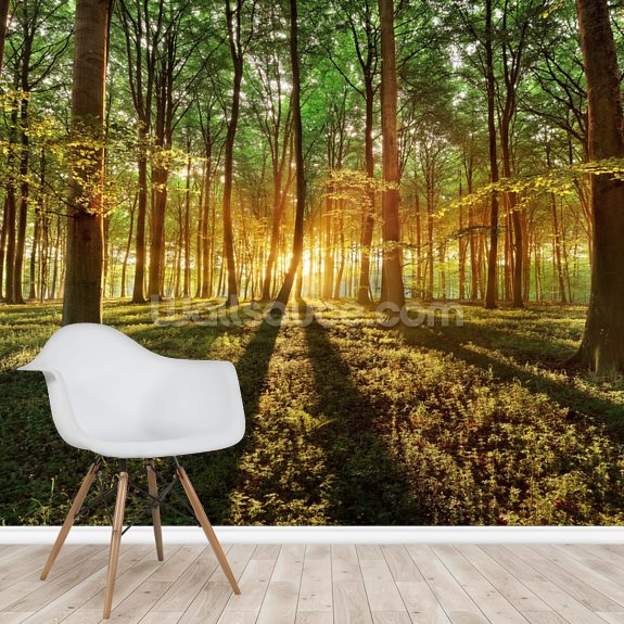 Spring Forest wallpaper mural room setting