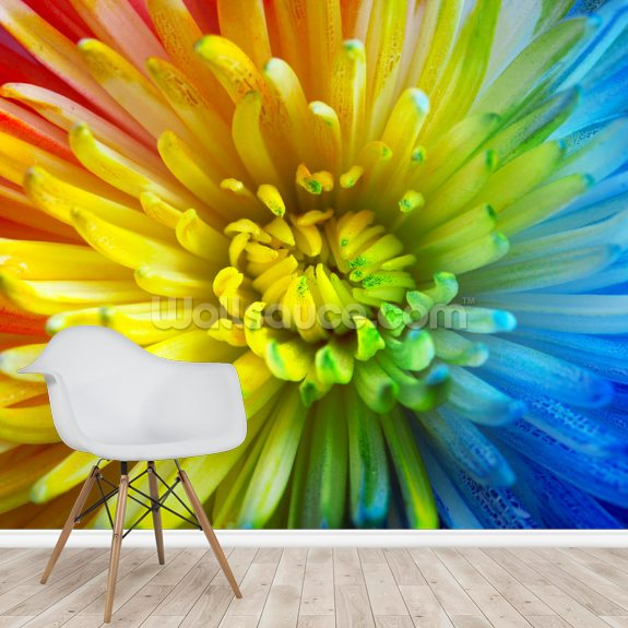 Rainbow Flower mural wallpaper room setting