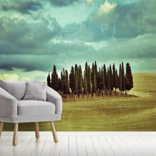Cypress Trees on Tuscan Landscape