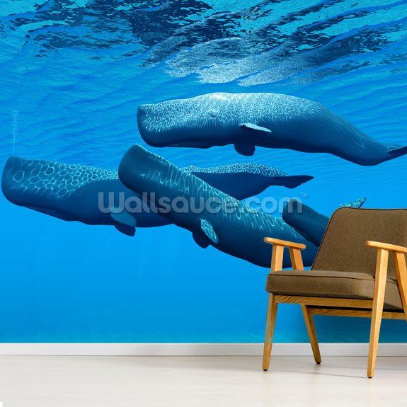 Sperm Whale Family Wallpaper Mural Wallsauce Nz