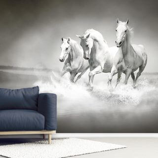 Horses Black & White Wallpaper Wall Murals