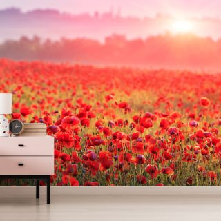 Red Poppy Sunrise Wallpaper Wall Murals