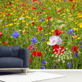 Single White Poppy Wallpaper Wall Murals