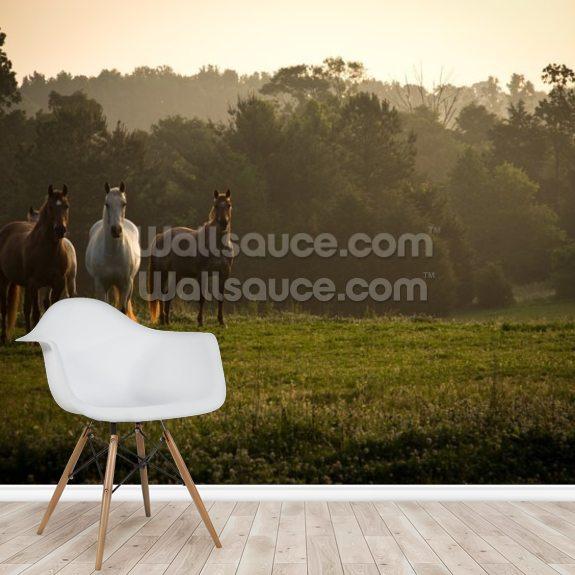 Wild Horses at Sunrise Wallpaper