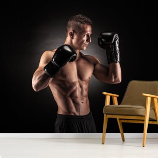 Boxer Wallpaper Wall Murals