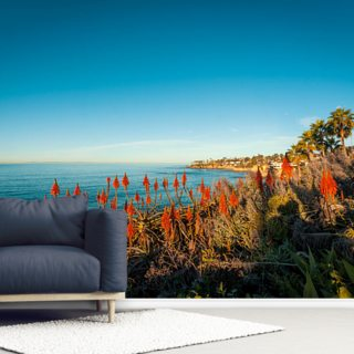 Laguna Beach Aloe Vera Wallpaper Wall Murals