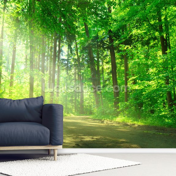 Forest Path in Sunshine wall mural room setting
