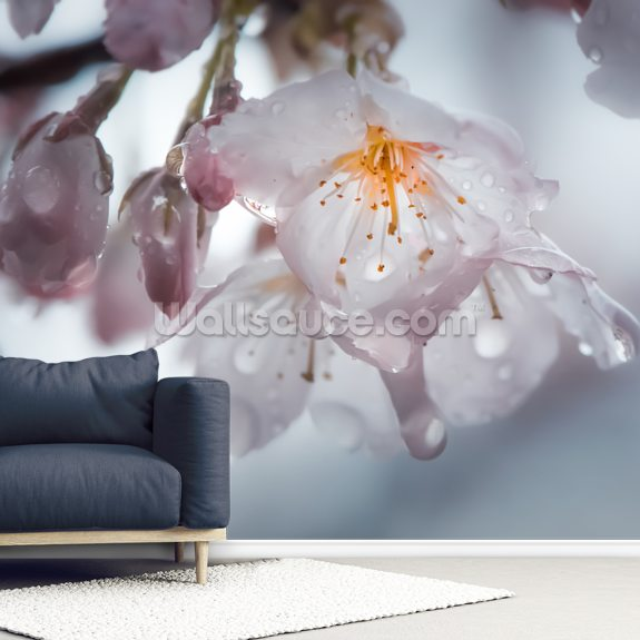 Raindrops on Cherry Blossom wallpaper mural room setting