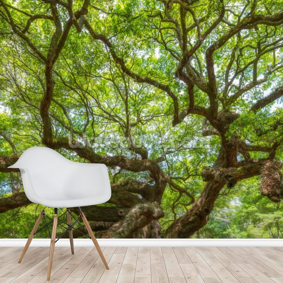 Angel Oak Tree Panoramic wall mural room setting