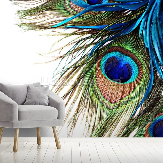 Large Peacock Feathers Wallpaper Mural Wallsauce Us