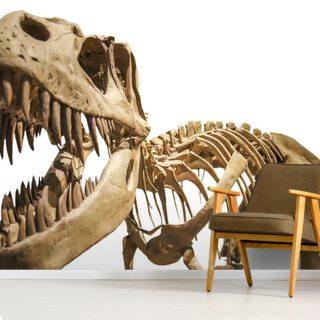 Tyrannosaurus Skeleton Wallpaper Wall Murals