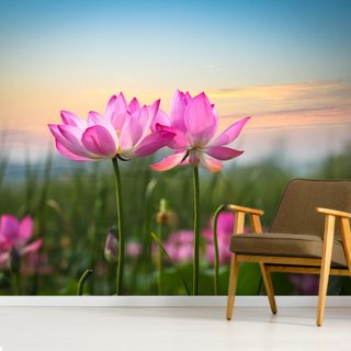 Lotus Flower in Sunset Wallpaper Wall Murals