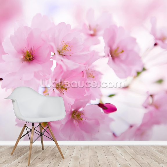 Japanese Cherry Tree in Blossom mural wallpaper room setting