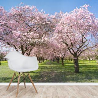 Cherry Blossom Wallpaper Wall Murals Wallsauce Au