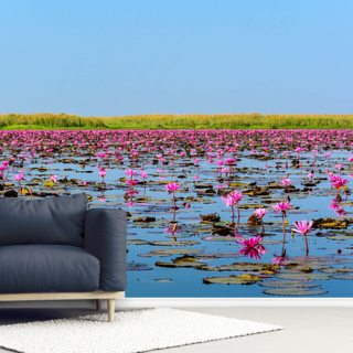 Sea of Pink Lotus 2