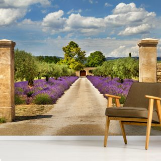 Provence - Lavender Pathway
