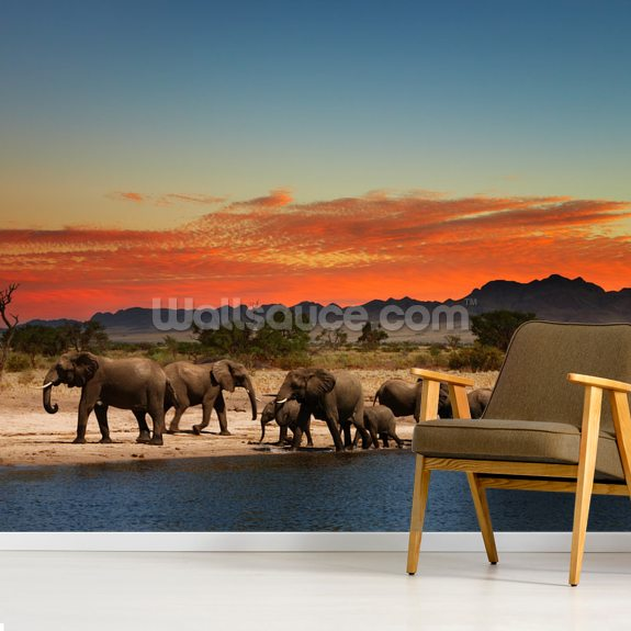 African Elephants wallpaper mural room setting
