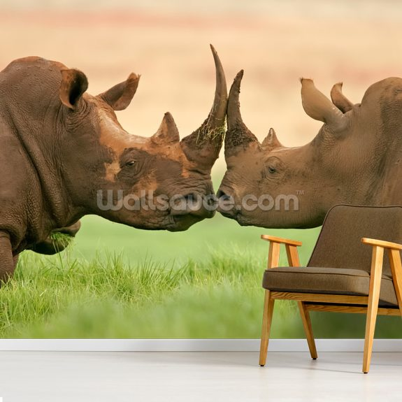 White Rhinos wall mural room setting