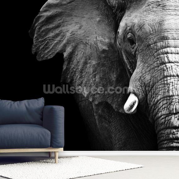 Elephant Close Up wall mural room setting