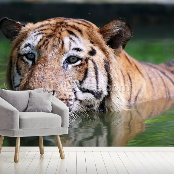 Tiger Bath wallpaper mural room setting