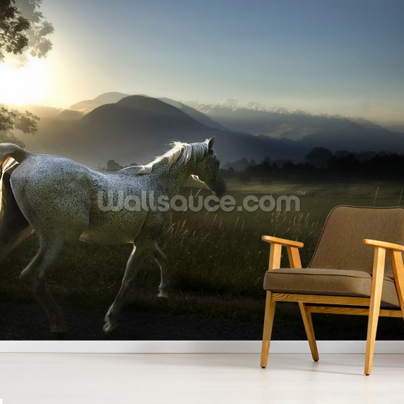 Arab Horse wall mural room setting