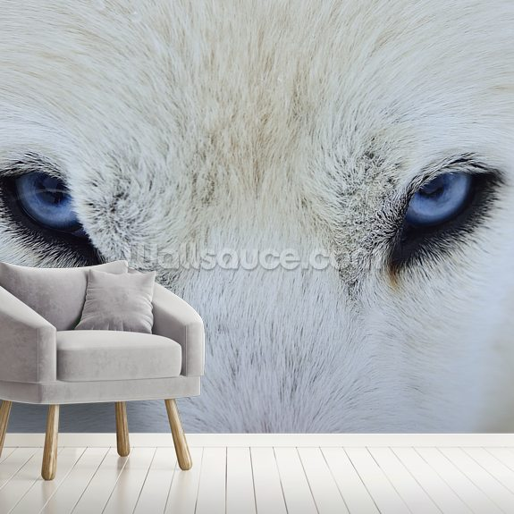 Wolf wallpaper mural room setting