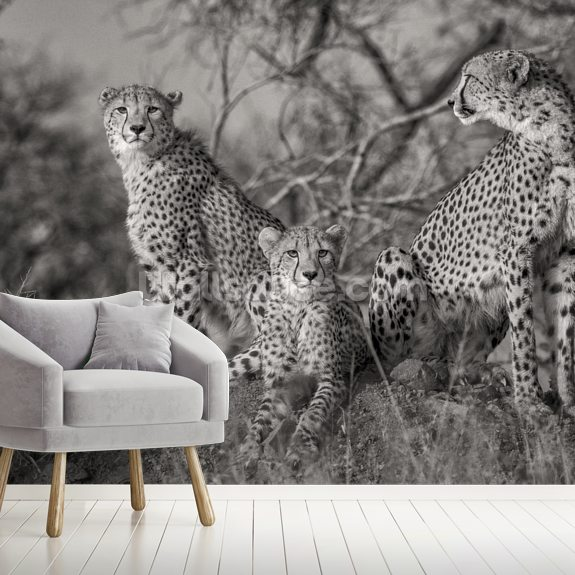 Three Cats mural wallpaper room setting
