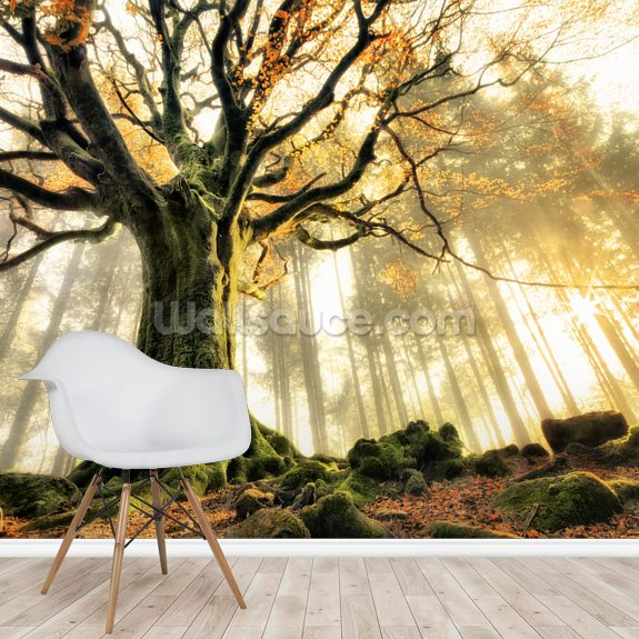 Tree Giant wallpaper mural room setting