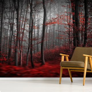 Red Carpet Forest