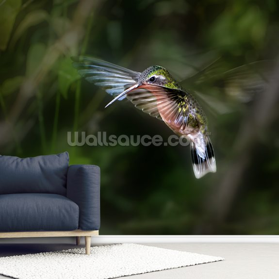 Hummingbird wallpaper mural room setting
