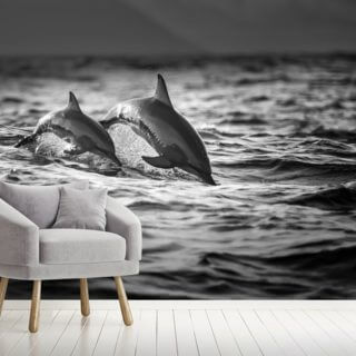 Dolphins Wallpaper Wall Murals