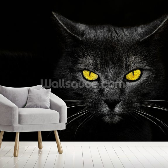 Cats Eyes mural wallpaper room setting