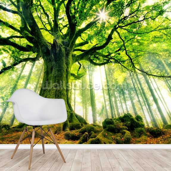 Mother Tree mural wallpaper room setting