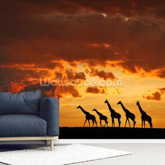 5 Giraffes mural wallpaper room setting
